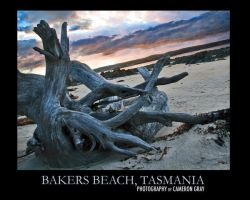 Tree - Bakers Beach, Tasmania by parablev