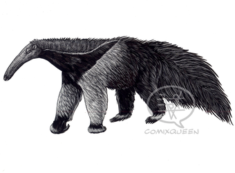 Anteater on Clayboard by comixqueen