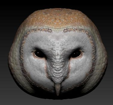 Barn Owl ZBrush by BetterTheDevilUKnow