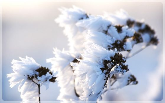 Frost Abstract by antiparticle