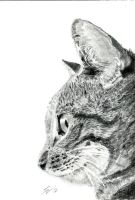 Graphite Pussy by edsart39