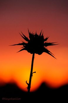 Thistle sunset by kayaksailor