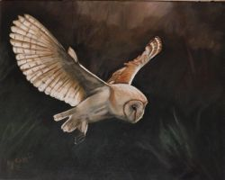 Barn owl my painting by cliford417