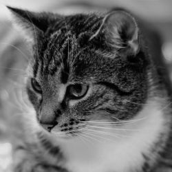 just a cat IV by Wilithin