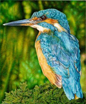 KingFisher - Ballpoint Pen by VianaArts