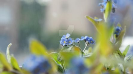 forget me nots 2 by Galena1