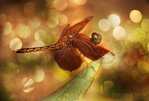 My lovely dragonfly by diensilver