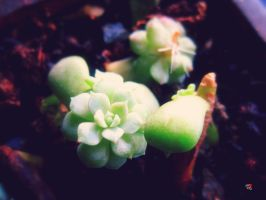A Little Life by jemgirl