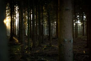 Forest at sunset 6 by mprangenberg