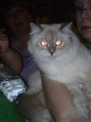 World cat show_Israel_pic5 by NyaFaker