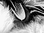 Feathers by Evicas