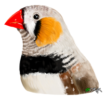 Zebra finch by Skoryx