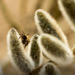 bumble-bee by Letiso