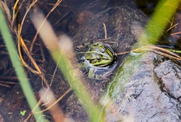 A frog (trust me it is a frog ! O: ) by YgsenddPhoto