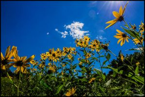 Reaching For the Sun by bdusen