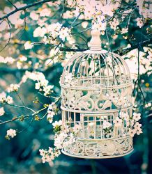 .:: Captured Hearts ::. by Whimsical-Dreams