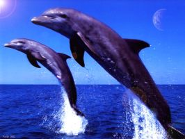 Dolphins by purity