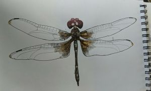 Dragonfly by TheHeadlessPheasant