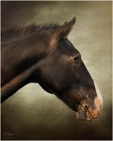 Snickers by TamarViewStudio