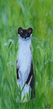 Weasel by WendyMitchell