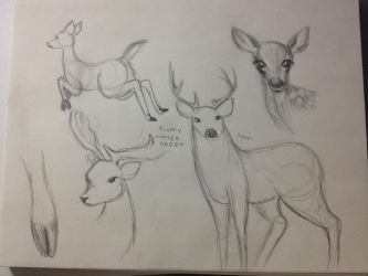 deer drawings by dream-star-slash
