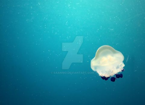 jellyfish by Saanmo