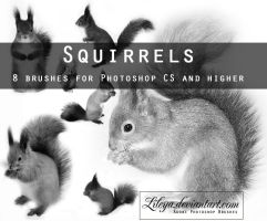 Squirrels PS brushes by Lileya