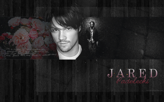 Jared Padalecki 1280x800 by Fustro