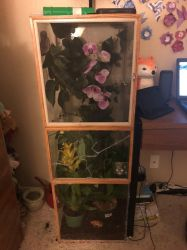 Crested Gecko Enclosure by rtsbts