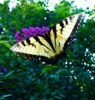 butterfly_yellow by dragorien