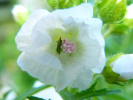 white flower with insect by VaybsStocks
