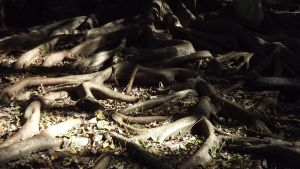 Terraced Tree Roots by LilipilySpirit
