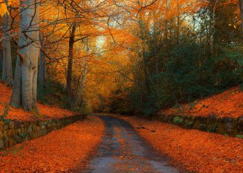 Autumn in Northumberland by newcastlemale