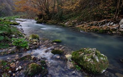 Autumn river by draganea
