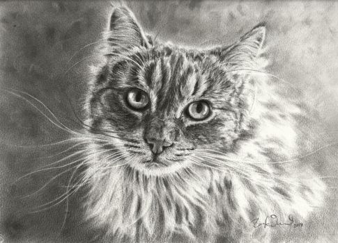 Norwegian Forest by Pappa60