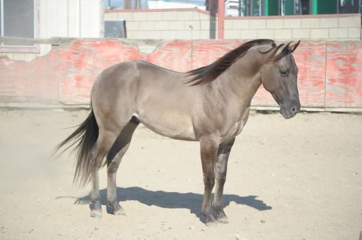 DWP FREE HORSE STOCK 237 by DancesWithPonies