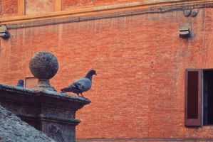 Pigeon observing the city by oanaunciuleanu