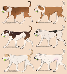 High White APBT Imports: OPEN by skypoot