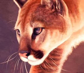 Cougar by Meorow