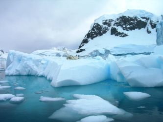 Crabeater Seals by Serendith