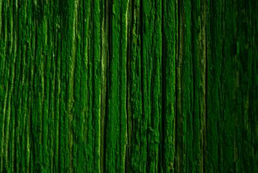 Wall of green by Djfragas