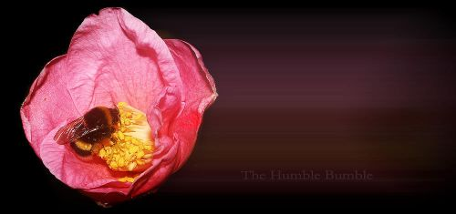 The humble bumble by alyn