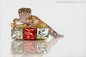 Christmas Presents by Alannah-Hawker