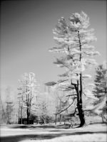 Infrared Tree by suricata5