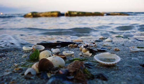 Shells by horicas
