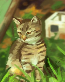 Kitten in the grass by Warayumi