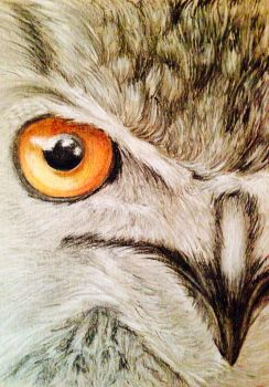 Owl Eye by SnailforPresident