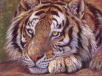 Pensive Tiger by sschukina