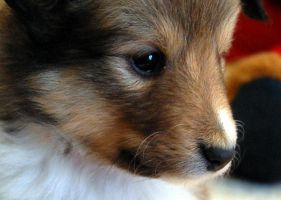 Puppy Close Up by fewofmany