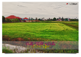 Paddy Field 2016 Perlis by carnine9